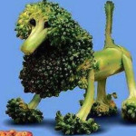 Broccoli poedel